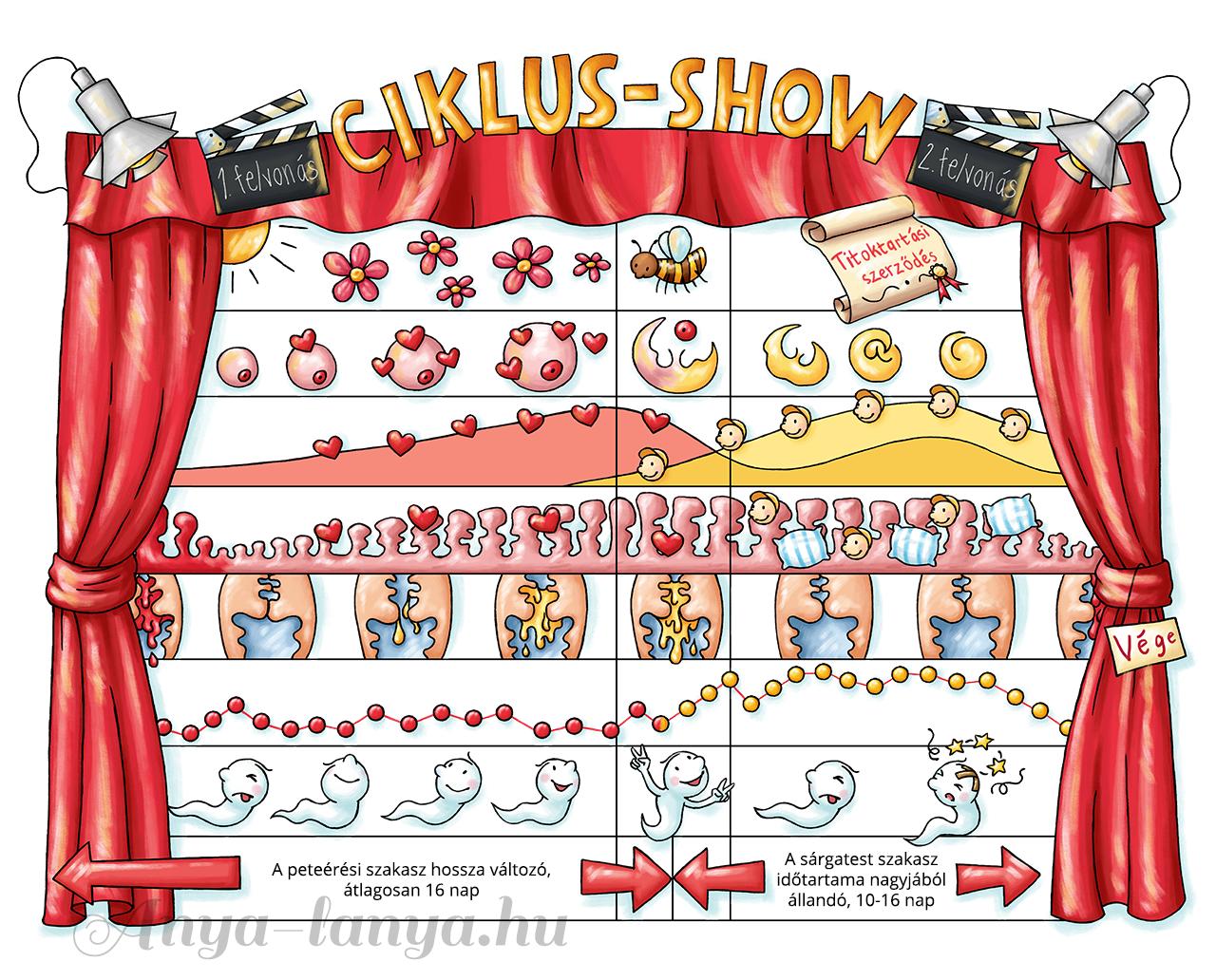 Termékenységtudatosság: a Ciklus-show program részletes ismereteket nyújt a női ciklus szakaszai, működése tekintetében